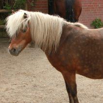 pony_10_01