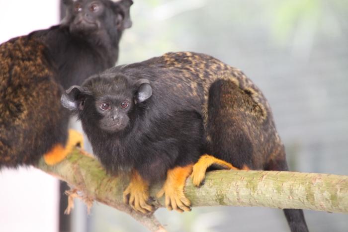 Neuzugänge-im-Zoo_2016-01