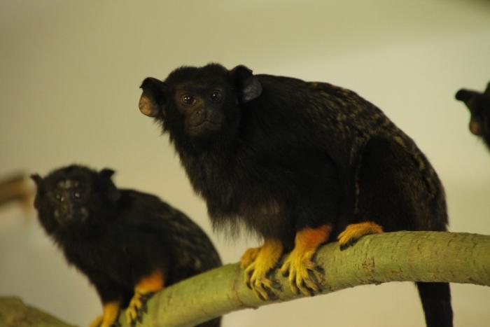 Neuzugänge-im-Zoo_2016-02
