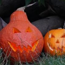 Die Monster sind los! Halloween im Zoo